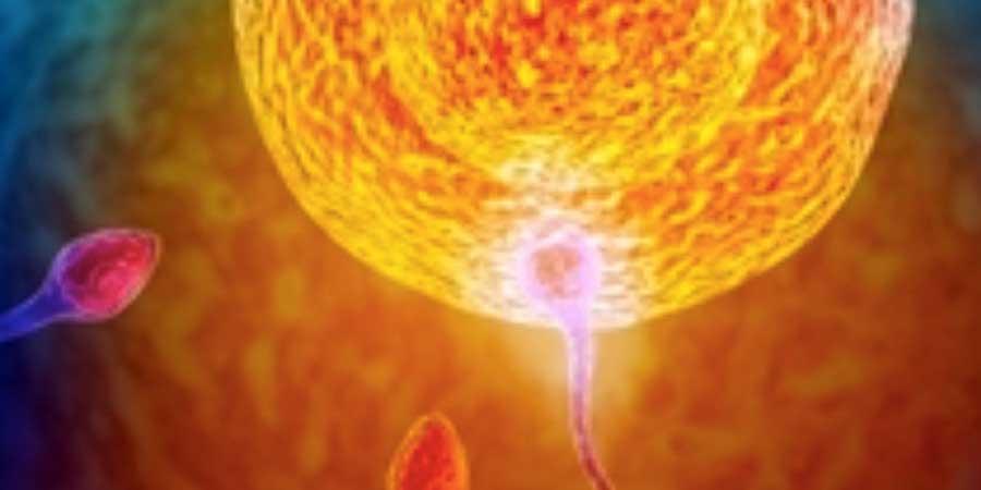 sperm yumurta tutunmasi